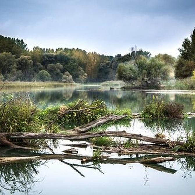 ¿Cómo podemos evitar la contaminación de los ríos?