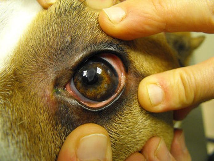 Oftalmología: Servicios de Animalvet