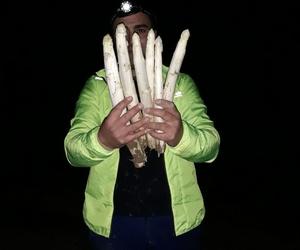 Espárragos del Vivero  Ortplant en Segovia
