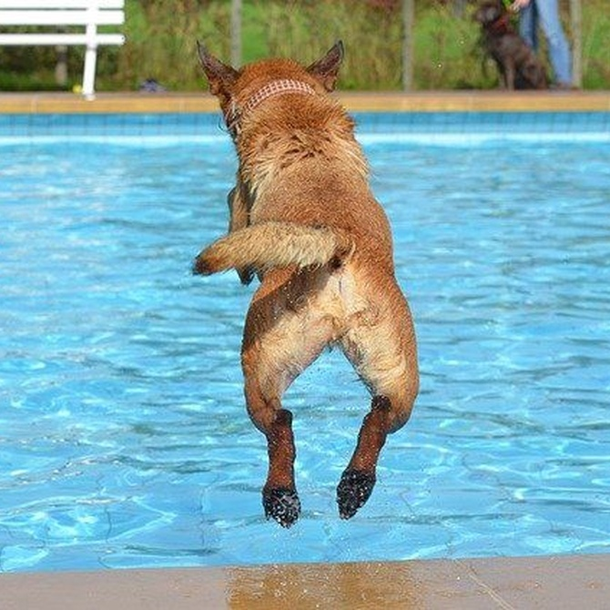 Perros a la piscina: sí, pero con precauciones