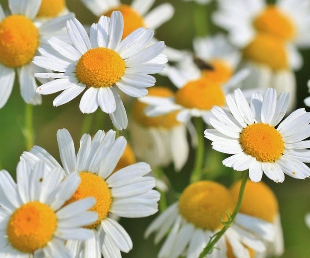 Ventajas de tomar plantas medicinales