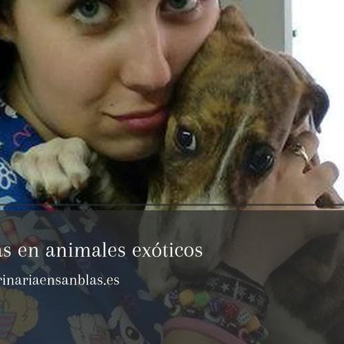 Clínicas veterinaria Los Alpes en Las Rosas (San Blas), Madrid: