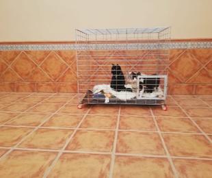 Alambradas metálicas para mascotas