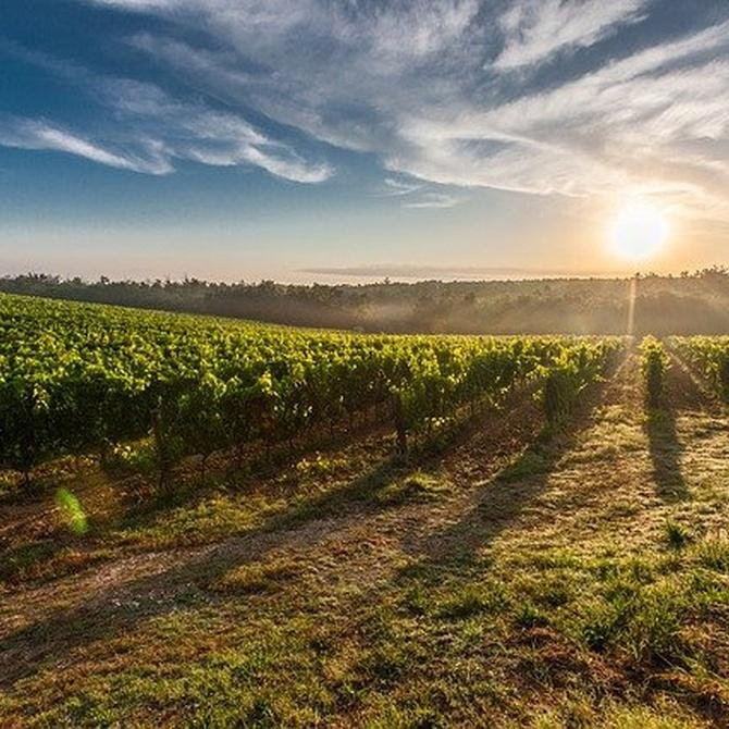 Visita a las bodegas de Rioja Alavesa