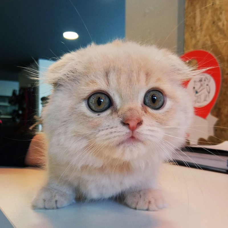 Peluquería felina: Servicios Veterinarios de Kan's&co Clínica Veterinària