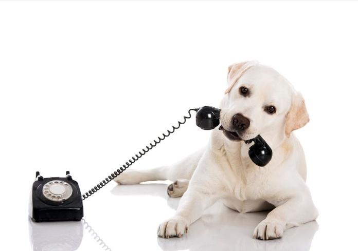 Servicio de urgencias telefónicas: Nuestros servicios de Huellas Centro Veterinario