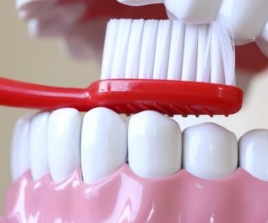 El primer cepillo dental