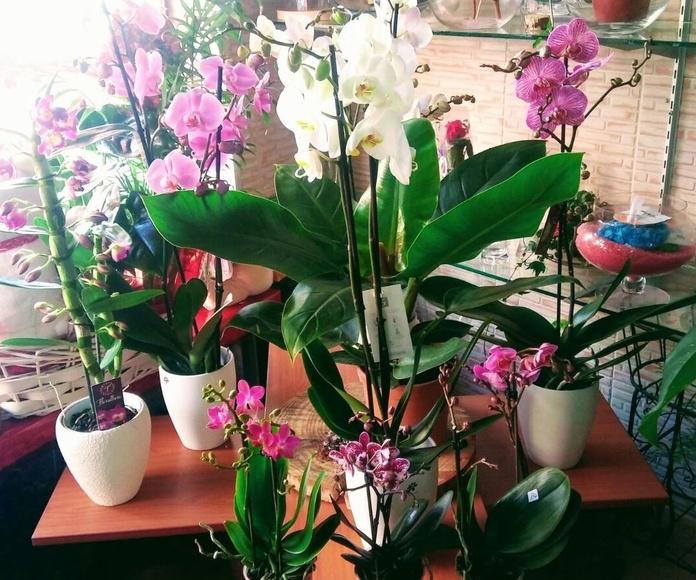 Plantas de interior y exterior: Productos y servicios de Floristería Miranda