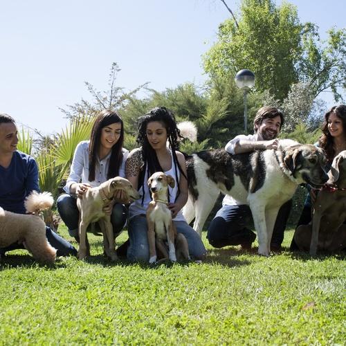 Centro veterinario en Ciudad Real