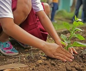 Alimentación ecológica y nuestro entorno