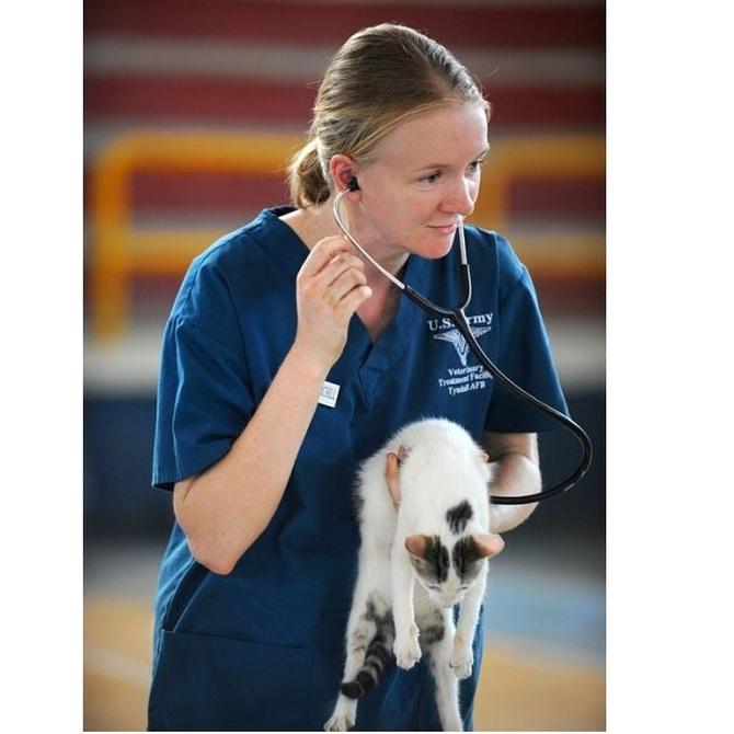 Las urgencias veterinarias más habituales en los gatos