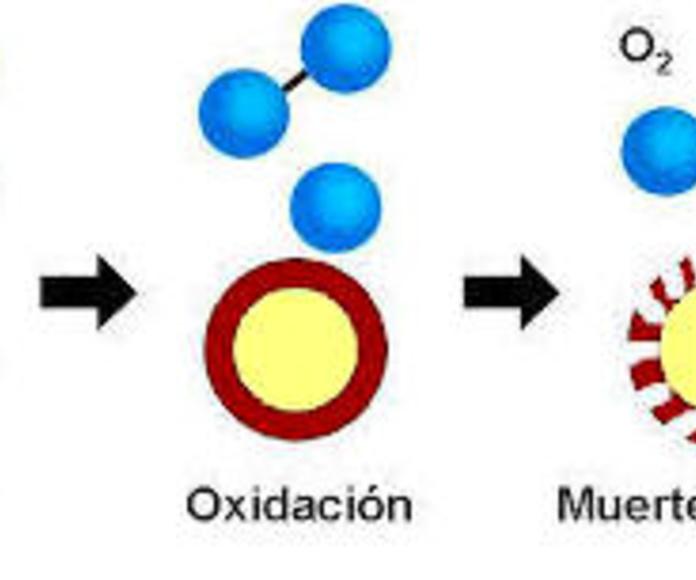 neutralizacion de bacterias
