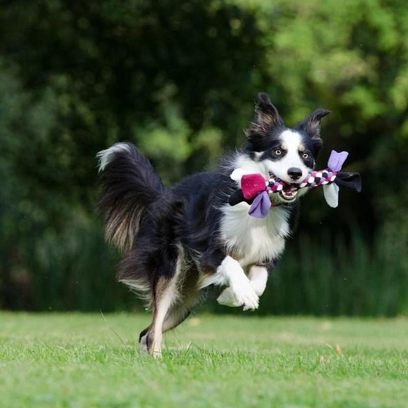 Juguetes y complementos: servicios de Itacan Peluquería Canina