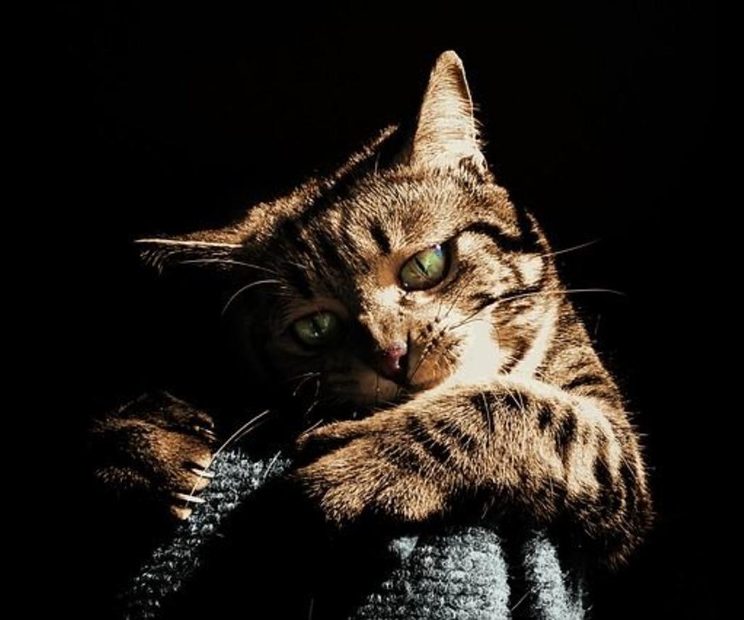 El rascador, salud para el gato y para tus muebles