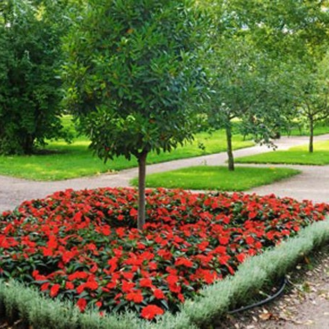 Cultivo y cuidado de las plantas de bulbo