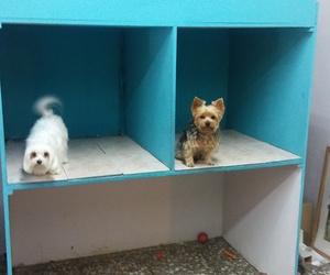Galería de Peluquería canina y felina en Elx | Al Perro Elegante