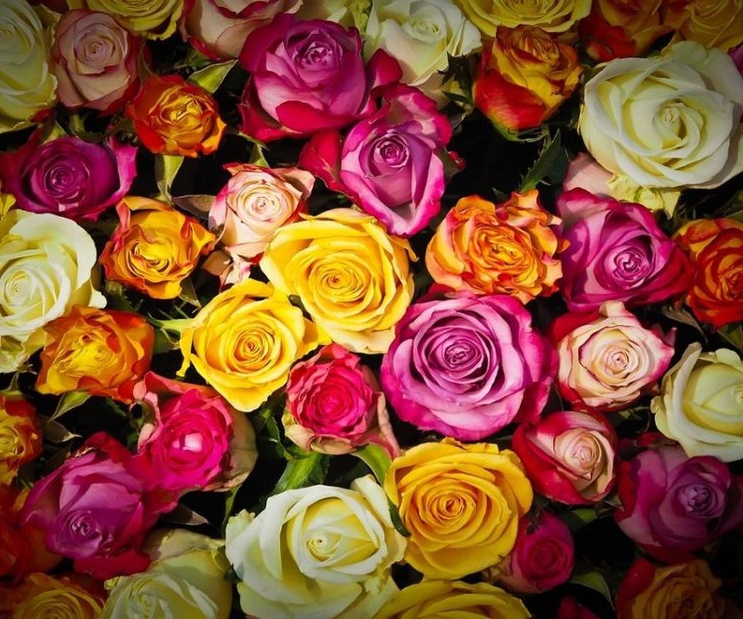 Lo que significa cada rosa