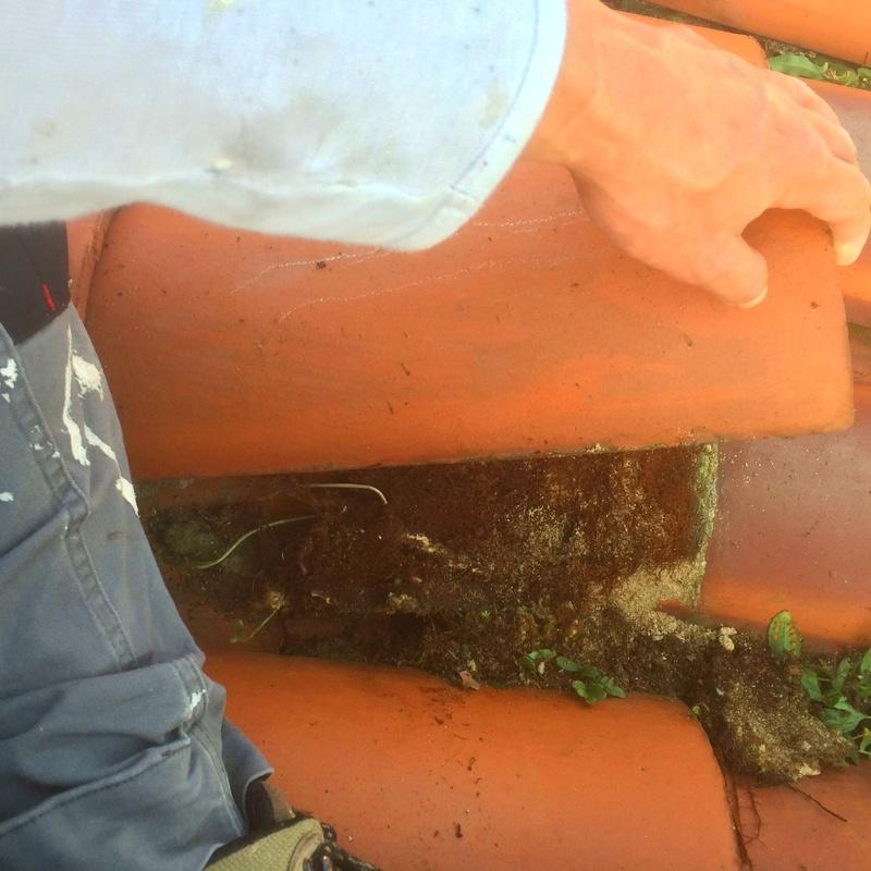 Limpieza y desinfeción de hierbas y hongos.