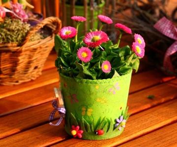 Plantas en canastas y centros