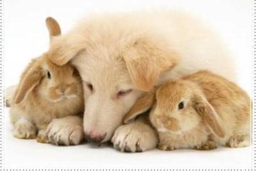 Fotos de Peluquerías caninas en Vitoria-Gasteiz | Clínica Veterinaria Jacinto Benavente