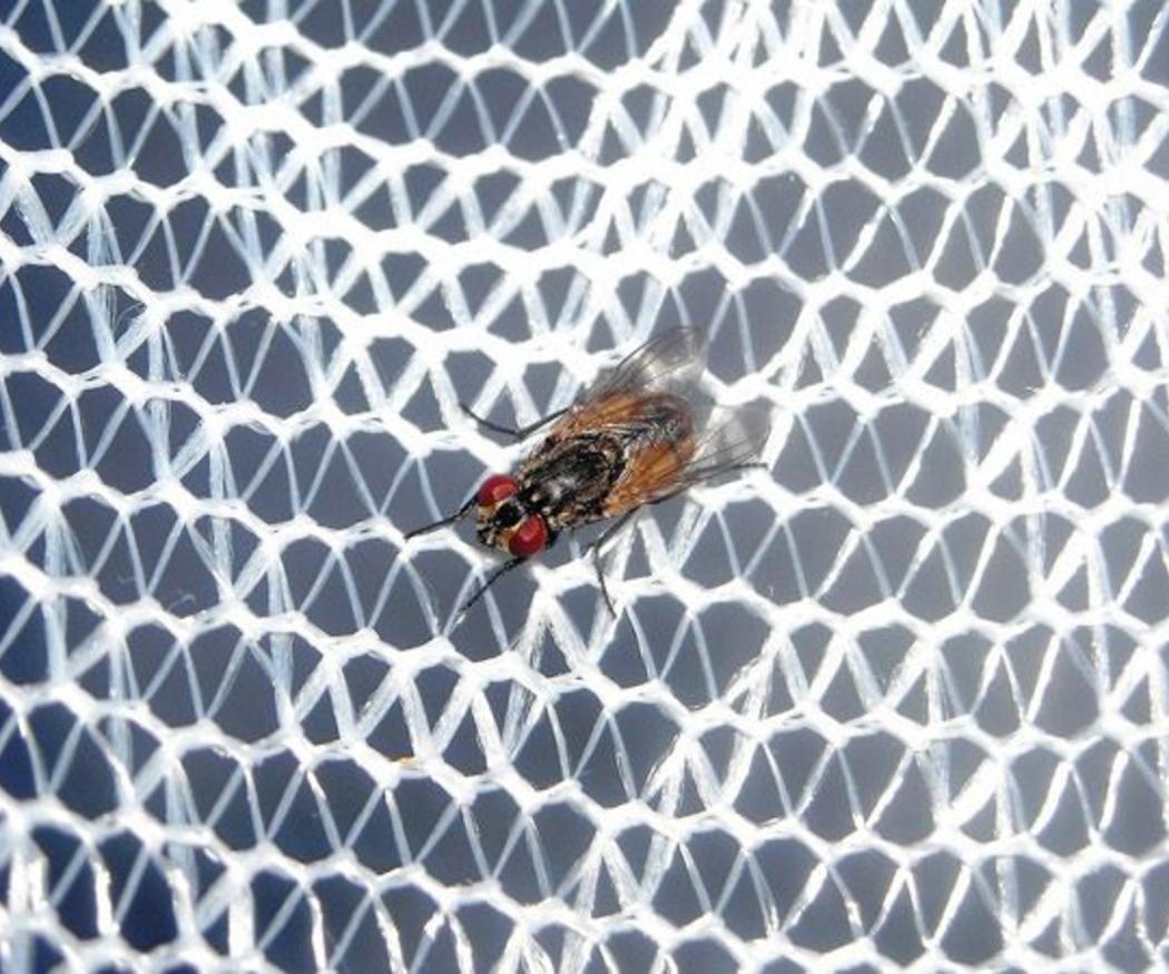 ¿Cuándo debes instalar una mosquitera?