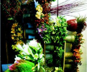 Galería de Floristerías en Lugo | Rose Flor