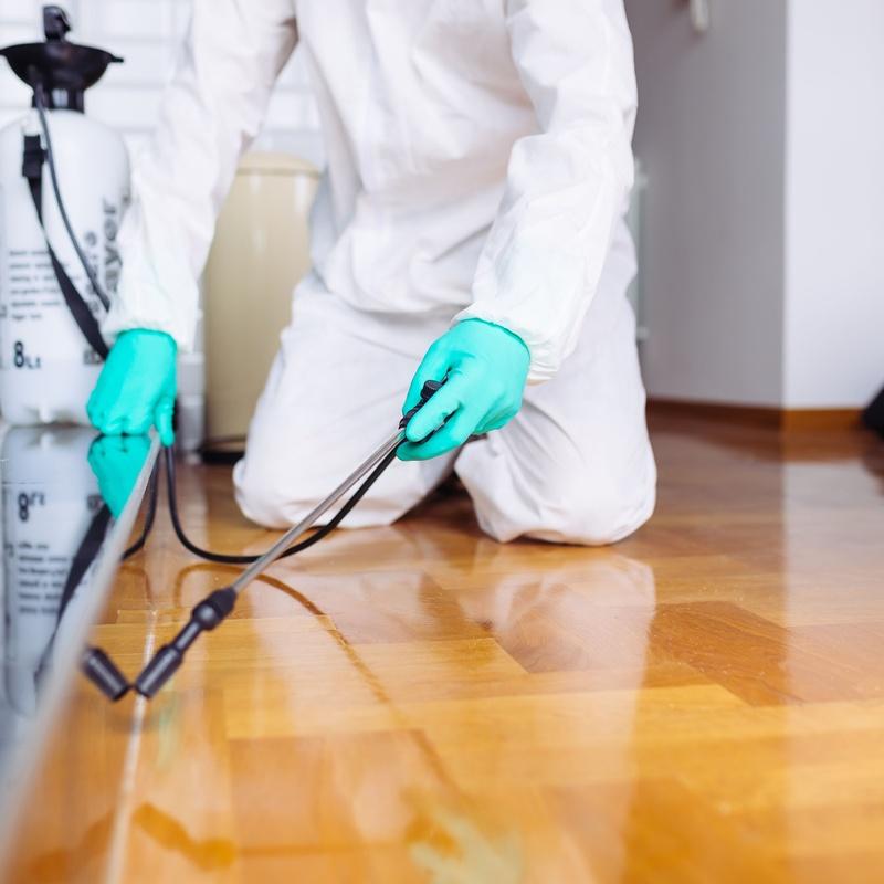 Tratamiento de plagas y desinfección: Servicios recogida de aceite de Reciclados Deter-Oil