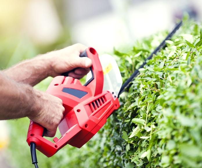 Servicios de jardinería: Servicios de Limpiezas El Despertar