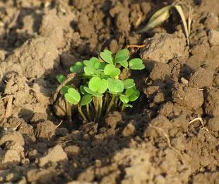 Venta de semillas