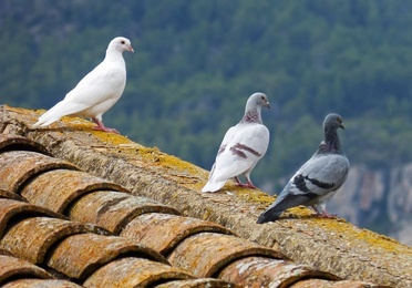 Control aves urbanas (redes, sistema de púas)