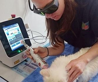 Peluquería: Servicios de Centro Veterinario Trivet
