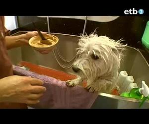 Clínicas veterinarias en Vitoria | Arabacan