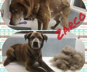 A Zarco le hemos quitado el abrigo de invierno. El exceso de muda puede ocasionar muchos picores y problemas de piel.