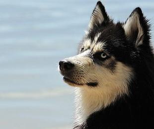 Omega 3, ¿qué beneficios proporciona al perro?
