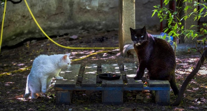 Clinica veterinaria en Benicasim