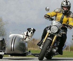 Recogida y entrega de gatos y perros