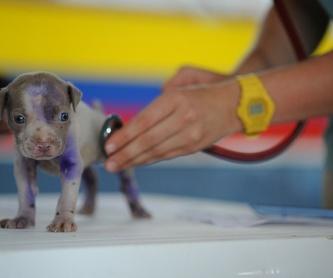 Medicina general: Servicios veterinarios de Clínica Veterinaria Dobermann II