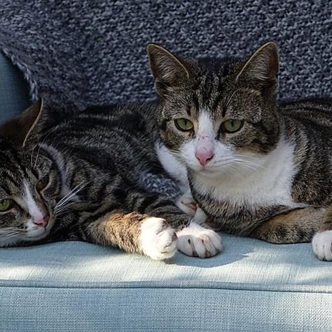 Las causas más comunes de visita al veterinario para gatos