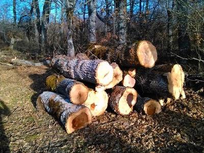 Talas: Servicios Forestales FsV