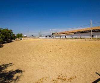 Doma y salto Sevilla: Nuestros servicios de Centro Hípico Doble M