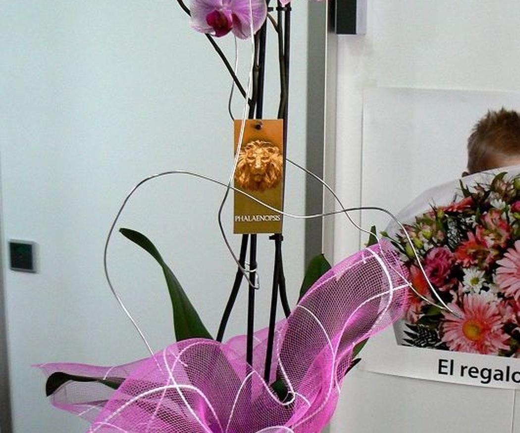 ¿Qué sabes de las orquídeas?