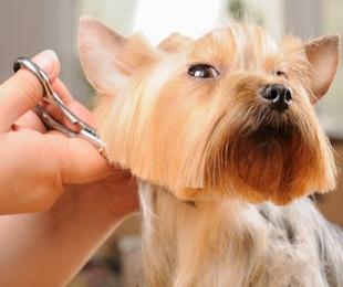 Curso de formación online en peluquería canina comercial