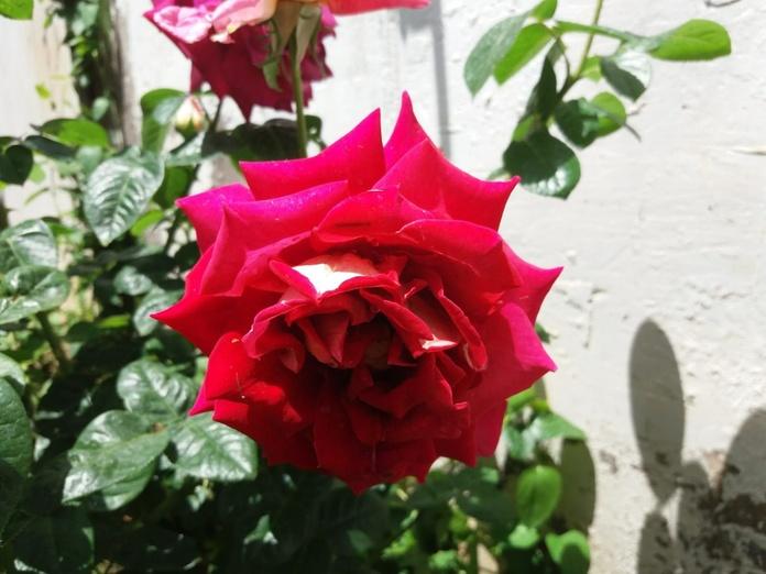 Floración de un jardín: Servicios de GT Verde