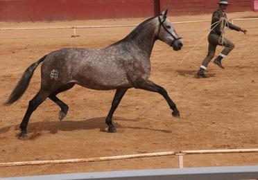 Doma y preparación de caballos