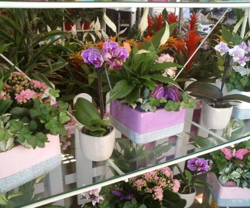 Flores para regalar en otoño
