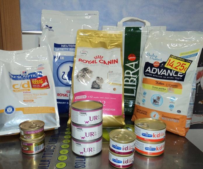 Gatos: ¿qué comen?: Catálogo de Clínica Veterinaria Rocafort