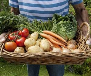 Mayoristas de hortalizas en Alicante