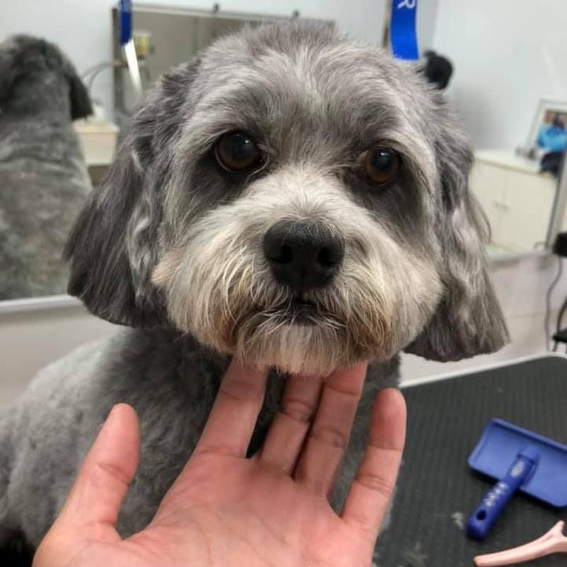 Peluquería canina: Servicios de MamaDog Grooming & Pet Shop