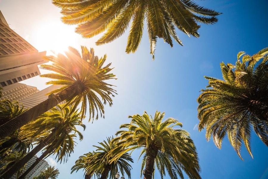 Las múltiples utilidades de la majestuosa palmera