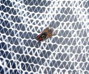 ¿Por qué se rompen las mosquiteras?